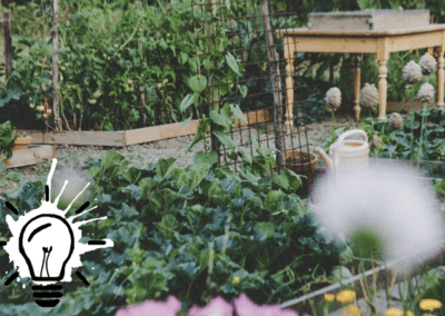 A shared vegetable garden in the city